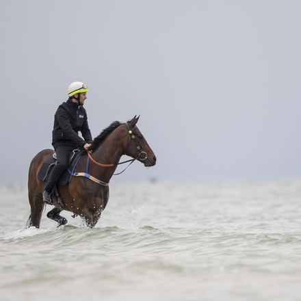 Winx-CaddenBen-10222017-0901 - WINX (brown) and RELIGIFY (chestnut) have a swim at Altona Beach.  Photo - Bronwen Healy.  The Image is Everything.  Bronwen...