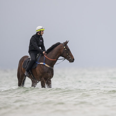 Winx-CaddenBen-10222017-0903 - WINX (brown) and RELIGIFY (chestnut) have a swim at Altona Beach.  Photo - Bronwen Healy.  The Image is Everything.  Bronwen...
