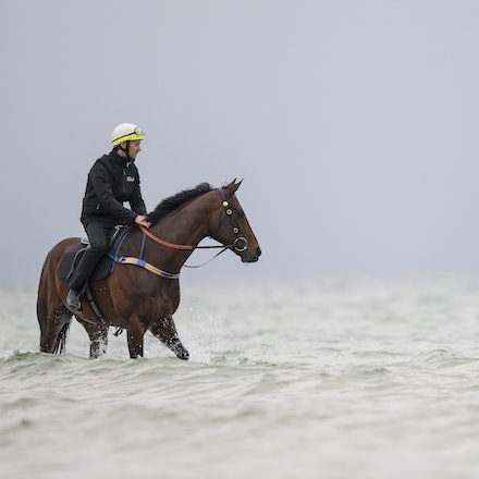 Winx-CaddenBen-10222017-0904 - WINX (brown) and RELIGIFY (chestnut) have a swim at Altona Beach.  Photo - Bronwen Healy.  The Image is Everything.  Bronwen...