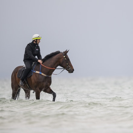 Winx-CaddenBen-10222017-0905 - WINX (brown) and RELIGIFY (chestnut) have a swim at Altona Beach.  Photo - Bronwen Healy.  The Image is Everything.  Bronwen...