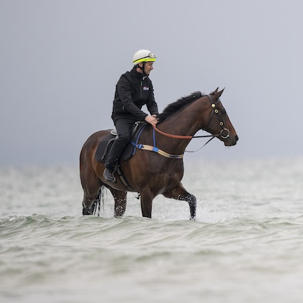 Winx-CaddenBen-10222017-0906 - WINX (brown) and RELIGIFY (chestnut) have a swim at Altona Beach.  Photo - Bronwen Healy.  The Image is Everything.  Bronwen...