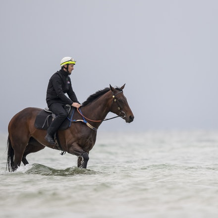 Winx-CaddenBen-10222017-0907 - WINX (brown) and RELIGIFY (chestnut) have a swim at Altona Beach.  Photo - Bronwen Healy.  The Image is Everything.  Bronwen...