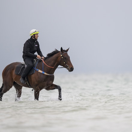 Winx-CaddenBen-10222017-0914 - WINX (brown) and RELIGIFY (chestnut) have a swim at Altona Beach.  Photo - Bronwen Healy.  The Image is Everything.  Bronwen...