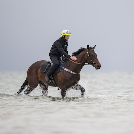 Winx-CaddenBen-10222017-0918 - WINX (brown) and RELIGIFY (chestnut) have a swim at Altona Beach.  Photo - Bronwen Healy.  The Image is Everything.  Bronwen...