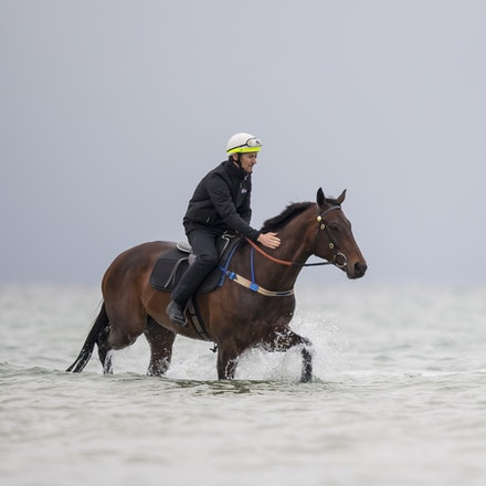 Winx-CaddenBen-10222017-0919 - WINX (brown) and RELIGIFY (chestnut) have a swim at Altona Beach.  Photo - Bronwen Healy.  The Image is Everything.  Bronwen...