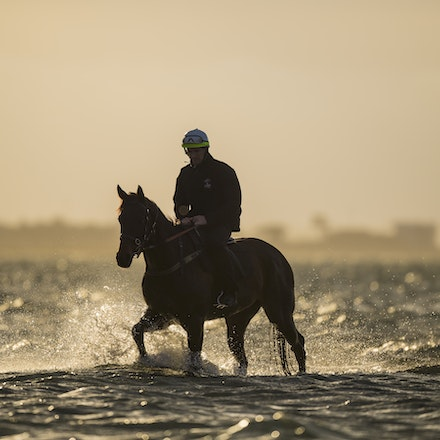 _BHP1270_1 - WINX (Street Cry - Vegas Showgirl) at Altona Beach.  Ridden by Ben Cadden.  Photo - Bronwen Healy.  The Image is Everything.  Bronwen Healy...