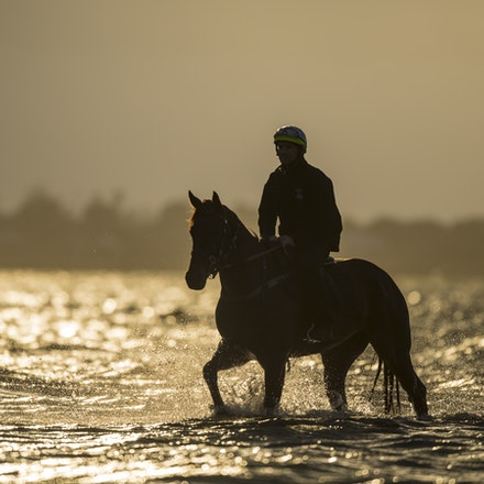 _BHP1284 - WINX (Street Cry - Vegas Showgirl) at Altona Beach.  Ridden by Ben Cadden.  Photo - Bronwen Healy.  The Image is Everything.  Bronwen Healy...