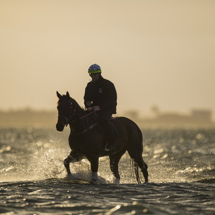 _BHP1270 - WINX (Street Cry - Vegas Showgirl) at Altona Beach.  Ridden by Ben Cadden.  Photo - Bronwen Healy.  The Image is Everything.  Bronwen Healy...