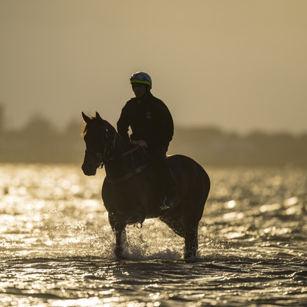 _BHP1287 - WINX (Street Cry - Vegas Showgirl) at Altona Beach.  Ridden by Ben Cadden.  Photo - Bronwen Healy.  The Image is Everything.  Bronwen Healy...