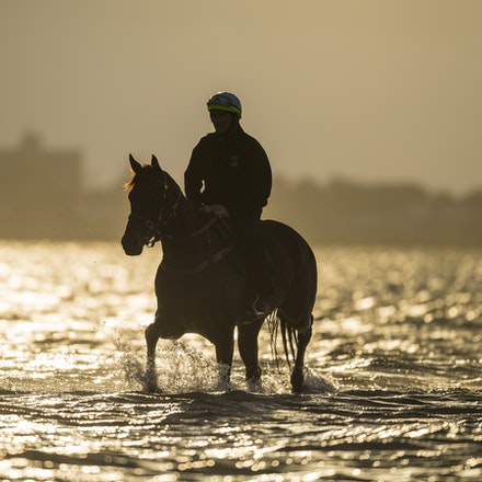 _BHP1294 - WINX (Street Cry - Vegas Showgirl) at Altona Beach.  Ridden by Ben Cadden.  Photo - Bronwen Healy.  The Image is Everything.  Bronwen Healy...