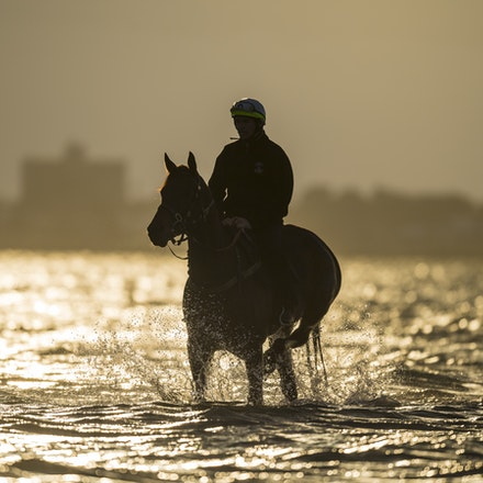 _BHP1296 - WINX (Street Cry - Vegas Showgirl) at Altona Beach.  Ridden by Ben Cadden.  Photo - Bronwen Healy.  The Image is Everything.  Bronwen Healy...