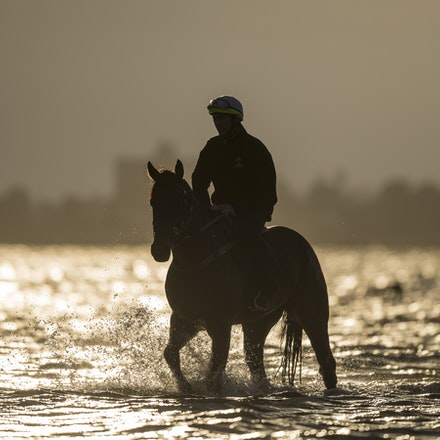 Winx-CaddenBen-10092017-1 - WINX (Street Cry - Vegas Showgirl) at Altona Beach.  Ridden by Ben Cadden.  Photo - Bronwen Healy.  The Image is Everything....