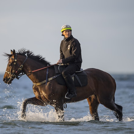 20171009:  Winx at Altona Beach - Champion WINX at the beach following her victory in the G1 Turnbull Stakes.