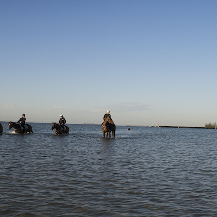 Winx-CaddenBen-10292017-6915 - Triple Cox Plate champion WINX has her regular recovery session at Altona Beach the day after equalling the immortal Kingston...