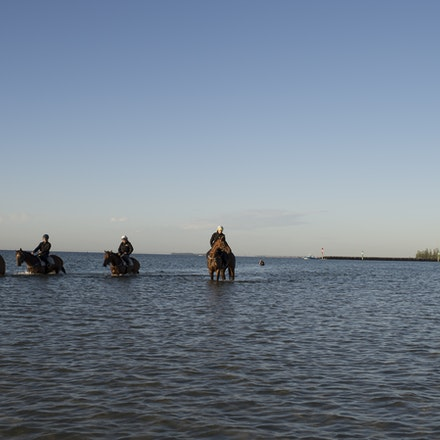 Winx-CaddenBen-10292017-6916 - Triple Cox Plate champion WINX has her regular recovery session at Altona Beach the day after equalling the immortal Kingston...