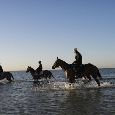 Winx-CaddenBen-10292017-6926 - Triple Cox Plate champion WINX has her regular recovery session at Altona Beach the day after equalling the immortal Kingston...