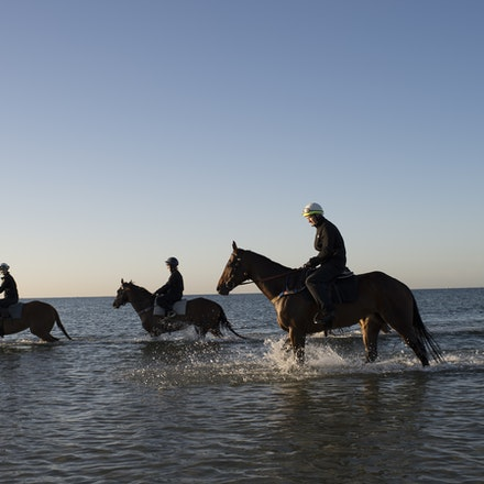 Winx-CaddenBen-10292017-6927 - Triple Cox Plate champion WINX has her regular recovery session at Altona Beach the day after equalling the immortal Kingston...