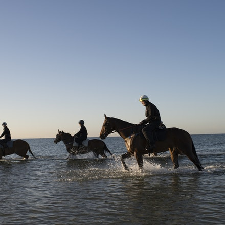 Winx-CaddenBen-10292017-6928 - Triple Cox Plate champion WINX has her regular recovery session at Altona Beach the day after equalling the immortal Kingston...