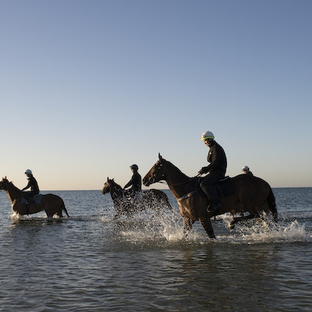 Winx-CaddenBen-10292017-6932 - Triple Cox Plate champion WINX has her regular recovery session at Altona Beach the day after equalling the immortal Kingston...