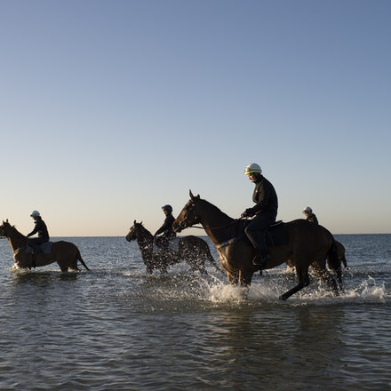 Winx-CaddenBen-10292017-6933 - Triple Cox Plate champion WINX has her regular recovery session at Altona Beach the day after equalling the immortal Kingston...