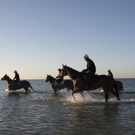 Winx-CaddenBen-10292017-6935 - Triple Cox Plate champion WINX has her regular recovery session at Altona Beach the day after equalling the immortal Kingston...