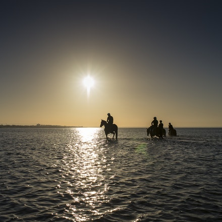 Winx-CaddenBen-10292017-6992 - Triple Cox Plate champion WINX has her regular recovery session at Altona Beach the day after equalling the immortal Kingston...