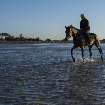 Winx-CaddenBen-10292017-7019 - Triple Cox Plate champion WINX has her regular recovery session at Altona Beach the day after equalling the immortal Kingston...