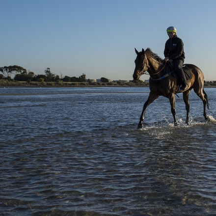 Winx-CaddenBen-10292017-7020 - Triple Cox Plate champion WINX has her regular recovery session at Altona Beach the day after equalling the immortal Kingston...