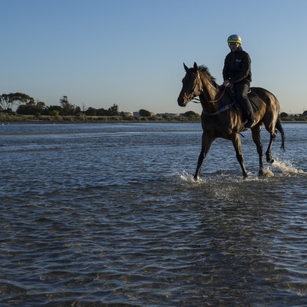 Winx-CaddenBen-10292017-7021 - Triple Cox Plate champion WINX has her regular recovery session at Altona Beach the day after equalling the immortal Kingston...