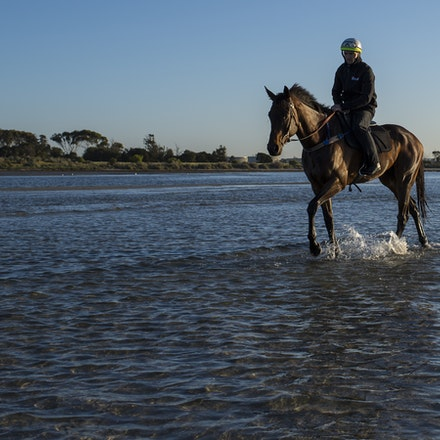 Winx-CaddenBen-10292017-7025 - Triple Cox Plate champion WINX has her regular recovery session at Altona Beach the day after equalling the immortal Kingston...