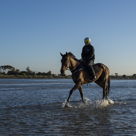 Winx-CaddenBen-10292017-7026 - Triple Cox Plate champion WINX has her regular recovery session at Altona Beach the day after equalling the immortal Kingston...