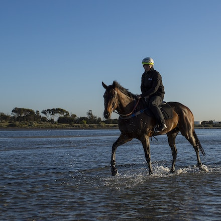 Winx-CaddenBen-10292017-7032 - Triple Cox Plate champion WINX has her regular recovery session at Altona Beach the day after equalling the immortal Kingston...