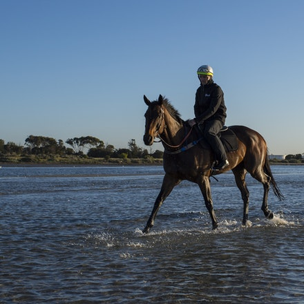 Winx-CaddenBen-10292017-7033 - Triple Cox Plate champion WINX has her regular recovery session at Altona Beach the day after equalling the immortal Kingston...