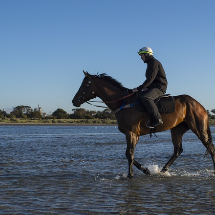 Winx-CaddenBen-10292017-7040 - Triple Cox Plate champion WINX has her regular recovery session at Altona Beach the day after equalling the immortal Kingston...