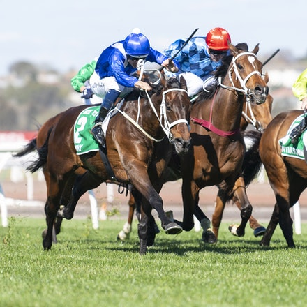 Winx-BowmanHugh-10062018-4004 - Photo by Bronwen Healy.  The Image is Everything - Bronwen Healy Photography.