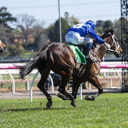 Winx-BowmanHugh-10062018-4038 - Photo by Bronwen Healy.  The Image is Everything - Bronwen Healy Photography.