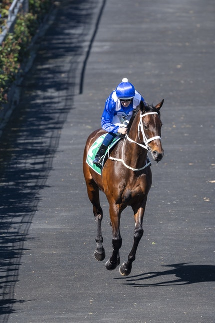 Winx-BowmanHugh-10062018-8716 - WINX and Hugh Bowman canter to the barriers before the G1 Turnbull Stakes.  Photo by Bronwen Healy.  The Image is Everything...