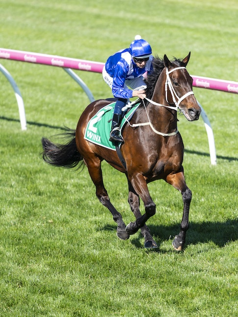 Winx-BowmanHugh-10062018-8810 - WINX and Hugh Bowman canter to the barriers before the G1 Turnbull Stakes.  Photo by Bronwen Healy.  The Image is Everything...