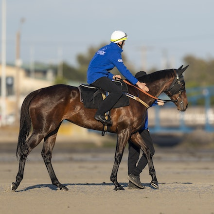 _BHP6391 - Champion mare WINX visits the beach at Altona after winning the G1 Turnbull Stakes.  She is ridden by Ben Cadden.  Photo by Bronwen Healy....