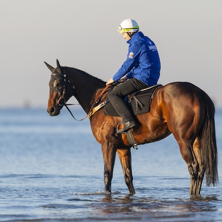Winx-CaddenBen-10072018-5112 - Champion mare WINX visits the beach at Altona after winning the G1 Turnbull Stakes.  She is ridden by Ben Cadden.  Photo...