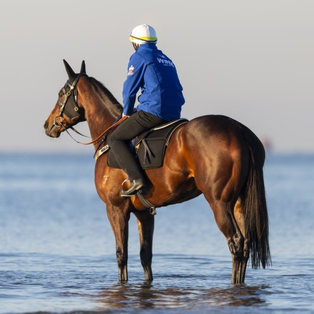 Winx-CaddenBen-10072018-5107 - Champion mare WINX visits the beach at Altona after winning the G1 Turnbull Stakes.  She is ridden by Ben Cadden.  Photo...