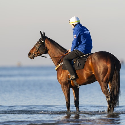 Winx-CaddenBen-10072018-5106 - Champion mare WINX visits the beach at Altona after winning the G1 Turnbull Stakes.  She is ridden by Ben Cadden.  Photo...