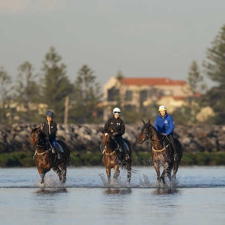 Winx-CaddenBen-10072018-5402 - Champion mare WINX visits the beach at Altona after winning the G1 Turnbull Stakes.  She is ridden by Ben Cadden.  Photo...