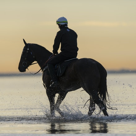 Winx-CaddenBen-10082018-7713 - WINX (ridden by Ben Cadden) enjoys a second beach session at Altona.  Photo by Bronwen Healy.  The Image is Everything -...
