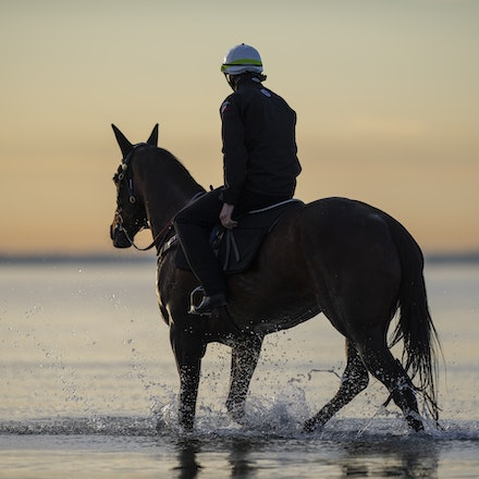 Winx-CaddenBen-10082018-7710 - WINX (ridden by Ben Cadden) enjoys a second beach session at Altona.  Photo by Bronwen Healy.  The Image is Everything -...