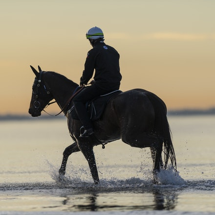 Winx-CaddenBen-10082018-7716 - WINX (ridden by Ben Cadden) enjoys a second beach session at Altona.  Photo by Bronwen Healy.  The Image is Everything -...