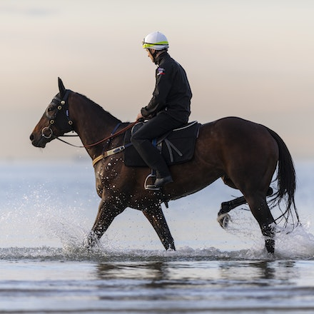 Winx-CaddenBen-10082018-8189 - WINX (ridden by Ben Cadden) enjoys a second beach session at Altona.  Photo by Bronwen Healy.  The Image is Everything -...