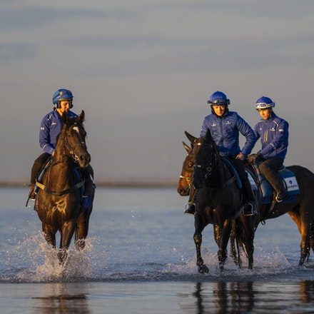 Avilius-10082018-6797 - AVILIUS (Pivotal - Alessandria) on the far left, with other members of the Godolphin string, at Altona Beach.  Photo by Bronwen...