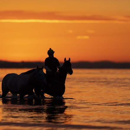 GaiWaterhouseHorse-10082018-6669 - Runners from the Gai Waterhouse stable at sunrise on Altona Beach.  Photo by Bronwen Healy.  The Image is Everything...