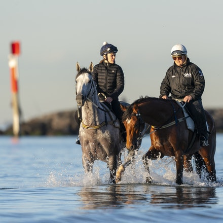 TheAutumnSun-D'argento-10142018-7375 - THE AUTUMN SUN (Redoute's Choice - Azmiyna) at Altona Beach, ridden by Johanne Taylor.  His companion is D'ARGENTO....